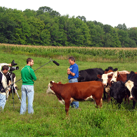 Cows interview